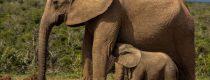 elephant-3093097_1920 copy